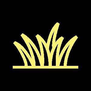 Grass Moderate